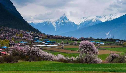 Peach Blossom Festival in Nyingtri