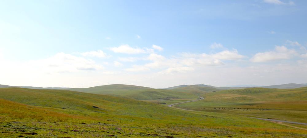 grassland in Jogne